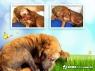 Resgate de cães em Caçapava